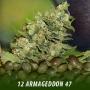 cannabis-seeds-ARMAGEDDON-47