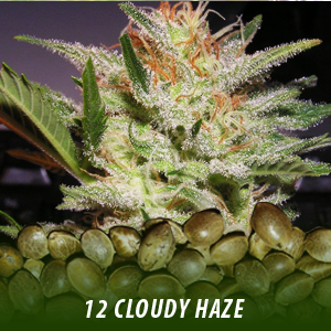 cannabis-seeds-CLOUDY-HAZE