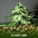 cannabis-seeds-FIRST-LADY