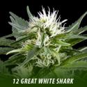 cannabis-seeds-GREAT WHITE SHARK