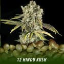 cannabis-seeds-HINDU-KUSH