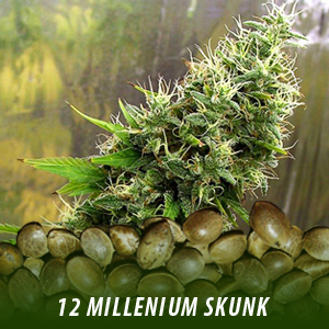 12 millenium Skunk Cannabis Seeds only $19