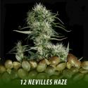 cannabis-seeds-NEVILLES-HAZE