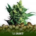 cannabis-seeds-SHANTI