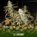 cannabis-seeds-SKUNK