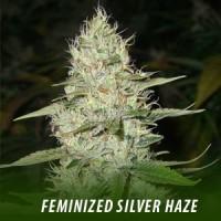 silverhaze
