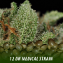 cannabis-seeds-DN-MEDICAL