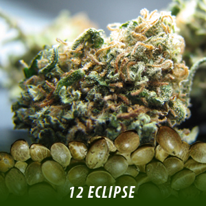 cannabis-seeds-ECLIPSE