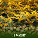 cannabis-seeds-FANTASY