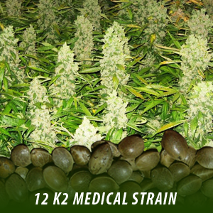 12  K2 Medical Strain Cannabis seeds