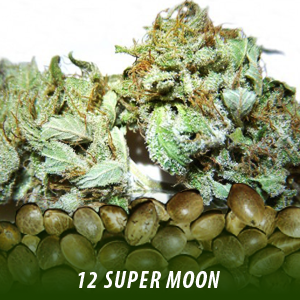 cannabis-seeds-SUPER-MOON