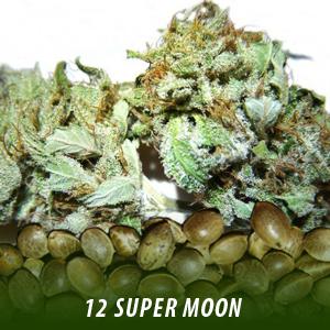 cannabis-seeds-SUPER-MOON
