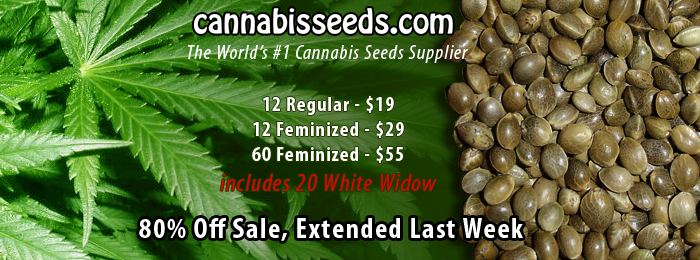Cannabis seeds for sale - 12 feminized only $29