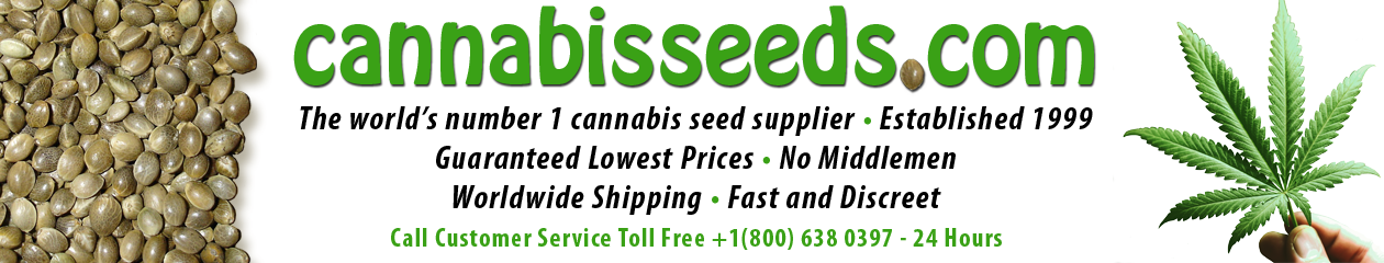 Cannabis Seeds for sale, Feminized and regular