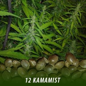cannabis-seeds-kamamist