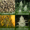 60 Feminized Seeds - Contents