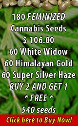 I80 Feminized Cannabis Seeds