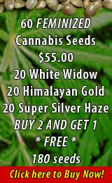 60 Feminized Cannabis Seeds
