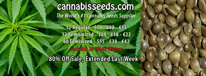 cannabis-seeds-banner-5